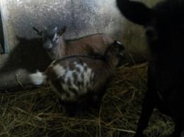 Kozy miniaturki