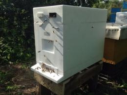 Odkłady pszczele z pasieki CUDNYMIODEK