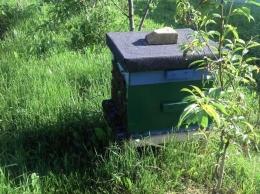 Pszczoły ule dadant odkłady roje sprzedam matki pszczele