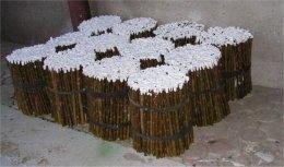 Wierzba energetyczna -sadzonki 200szt po 4,5gr/szt.