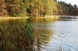 Mazury Stare Juchy grunty 8,43ha z WZ z dojściem do jeziora Garbas położone przy lesie.