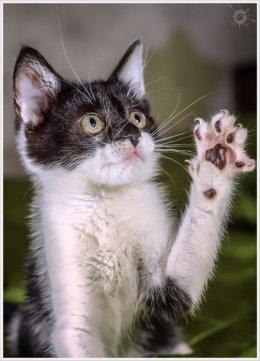 Piękne kociaki szukają domów!