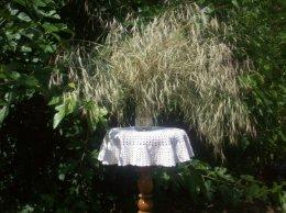 Dzikie zioła ukwiecające pomieszczenia