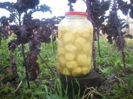 Kiszone ziemniaki