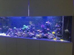 Akwarium 245x64x75 1000l+stelaz+sump+obudowa+LED