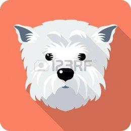 Usługa krycia -West Highland White Terier 500 zł - Lublin