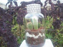Żywa kompozycja roślinna w szkle 1