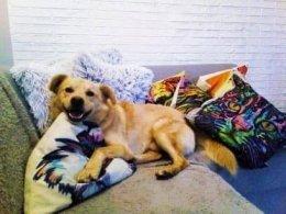 Cheddar, kochający, łagodny psiak, szuka domu!