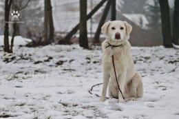 Śnieżnobiały Oliwier szuka super domu! Pokochasz go?
