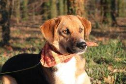 Zulu - super pies szuka super domu :-)