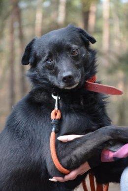 Ziggi , uroczy psiak pilnie szuka domu !