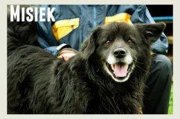 Misiek - super psiak dla osoby, która chce uratować zwierzaka :)