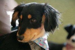 Roj - psie dziecko, które szuka miłości i bezpieczeństwa