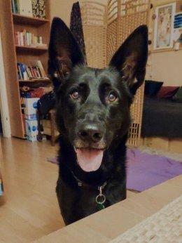 Wspaniały Pies Szuka Kochającego Domu Po Śmierci Właściciela!