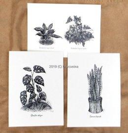 Botanika rośliny grafiki czarnobiałe filodendron monstera reprinty
