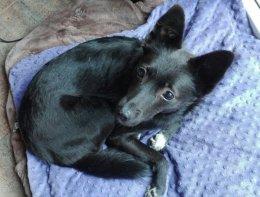 Gacuś - niewidomy piesek szuka domu