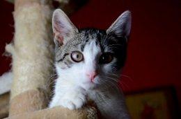 Dynka szuka domu kot adopcja