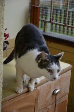 Kotek Tymek - szuka domu