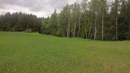 Mazury grunty działki w okolicach jeziora lasu
